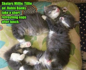 Lunchtime naps at Kuppykakes..