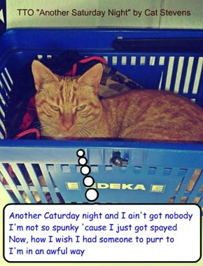 """Another Caturday Night"" (TTO ""Another Saturday Night"" by Cat Stevens)"