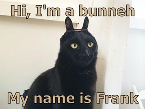 Hi, I'm a bunneh  My name is Frank