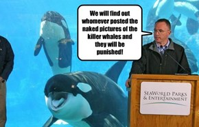 We will find out whomever posted the naked pictures of the killer whales and they will be punished!