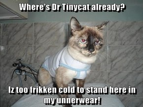 Where's Dr Tinycat already?  Iz too frikken cold to stand here in my unnerwear!