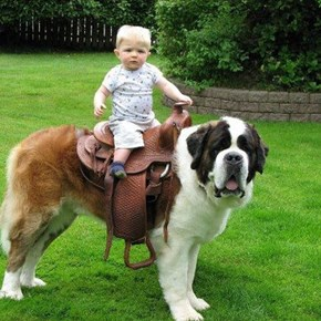 Look at My Noble Steed!
