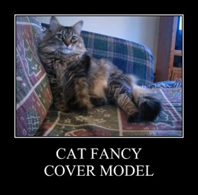 CAT FANCY COVER MODEL