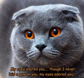 My eyes adored you.... though I never  laid a paw on you, my eyes adored you....