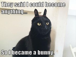 They said I could become anything...  So I became a bunny.
