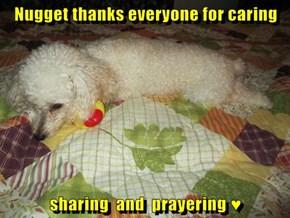 Nugget thanks everyone for caring  sharing  and  prayering ♥