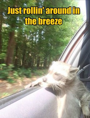 Just rollin' around in the breeze