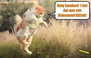 Coach Bellbottoms iz startled when walking to teh Skool Gym for a vigorous workouts.. Coach thawt he herd a cat-like noise an' den somefing quickly ran thru teh tall weeds!
