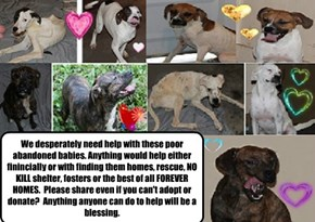 We've started a fundraiser for the 5 thrown away pups we rescued in July. Our link is http://www.gofundme.com/helpthe5