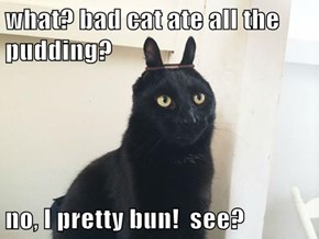 what? bad cat ate all the pudding?  no, I pretty bun!  see?