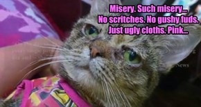 Misery. Such misery...  No scritches. No gushy fuds.  Just ugly cloths. Pink...