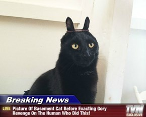 Breaking News - Picture Of Basement Cat Before Exacting Gory Revenge On The Human Who Did This!
