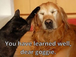 You have learned well, dear goggie.