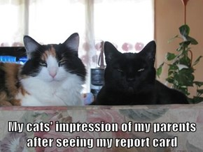 My cats' impression of my parents after seeing my report card