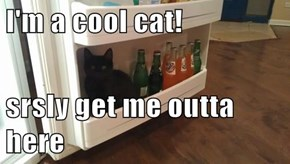 I'm a cool cat!  srsly get me outta here