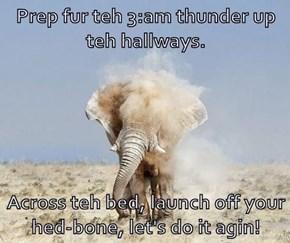 Prep fur teh 3:am thunder up teh hallways.   Across teh bed, launch off your hed-bone, let's do it agin!