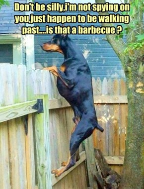 Don't be silly,i'm not spying on you,just happen to be walking past....is that a barbecue ?