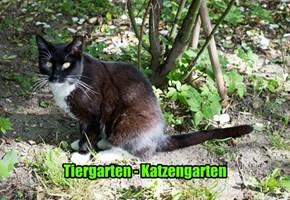 Tiergarten - Katzengarten