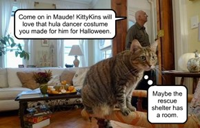 Come on in Maude! KittyKins will love that hula dancer costume you made for him for Halloween.