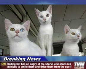 Breaking News - Ceiling Cat has an angry at the sharks and sends his minions to smite them and drive them from the pool!