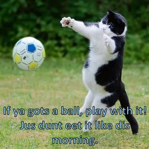 If ya gots a ball, play with it! Jus dunt eet it like dis morning.