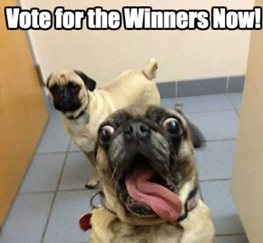Vote Now and Decide Who Captioned the Best of These Pugs!