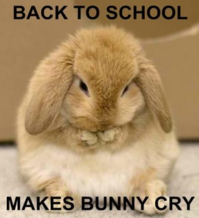 BACK TO SCHOOL  MAKES BUNNY CRY