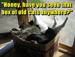 """Honey, have you seen that box of old cats anywhere?"""