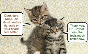 Dr Tinycat treats Shyster Millie for a slight head bump she gots from teh fierce Tornado winds she habs endured..