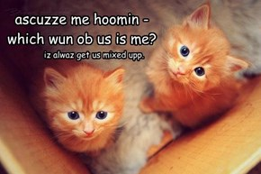 ascuzze me hoomin - which wun ob us is me?