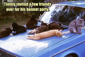 Timmy invited a few friends over for his bonnet party.
