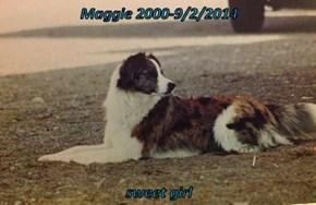 Maggie 2000-9/2/2014  sweet girl
