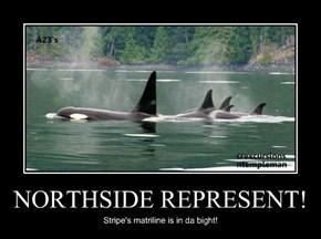 NORTHSIDE REPRESENT!