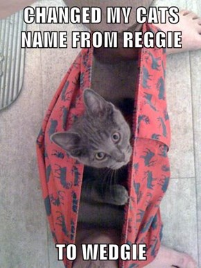 CHANGED MY CATS NAME FROM REGGIE   TO WEDGIE