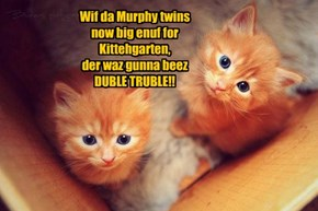 Wif da Murphy twins  now big enuf for  Kittehgarten, der waz gunna beez  DUBLE TRUBLE!!