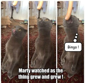 Marty watched as the thing grew and grew !