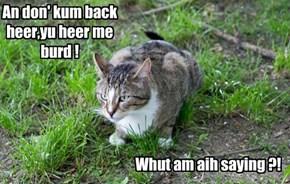 An don' kum back heer,yu heer me burd !