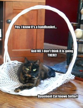 My basket and it goes nowhere without my permission!