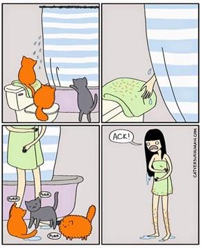 Cat Initiation