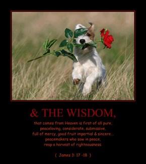 & THE WISDOM,