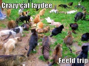 Crazy cat laydee  Feeld trip