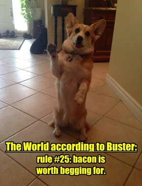Buster Has A Strong Life Plan