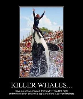 KILLER WHALES...