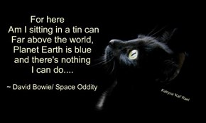 For here      Am I sitting in a tin can     Far above the world,     Planet Earth is blue     and there's nothing     I can do....