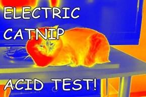 ELECTRIC CATNIP  ACID TEST!
