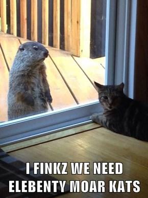 I FINKZ WE NEED ELEBENTY MOAR KATS