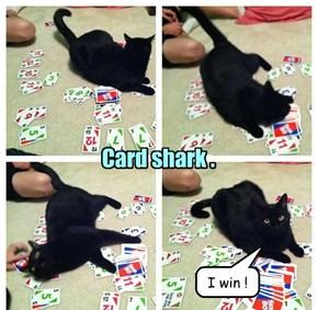 Basment Cat Always Wins