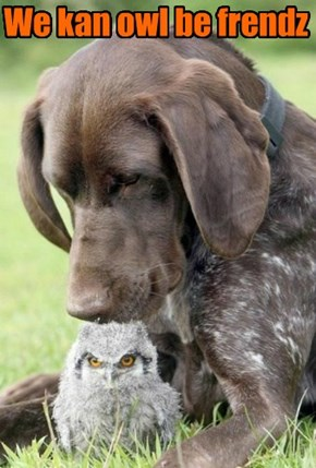 We kan owl be frendz