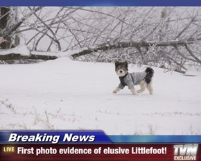 Breaking News - First photo evidence of elusive Littlefoot!