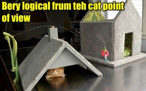 Bery logical frum teh cat point  of view